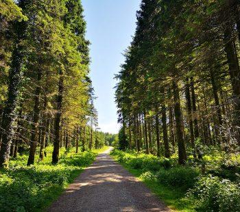 Bellever-forest-walk